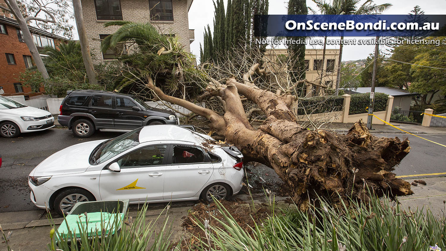 Wild weather and strong winds take down tree in Randwick