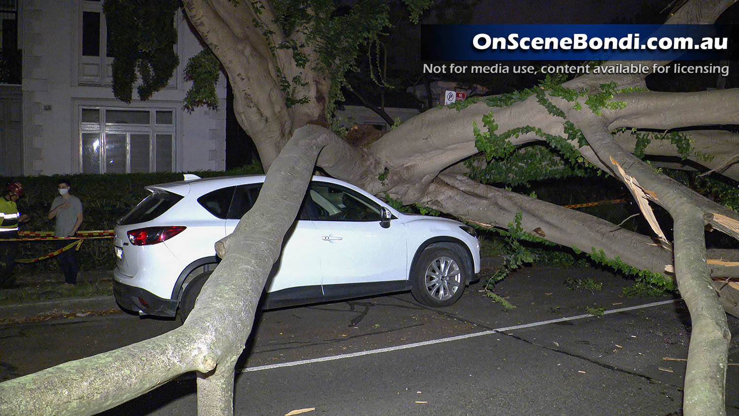 Tree crashes onto roadway cutting power to homes in Woollahra